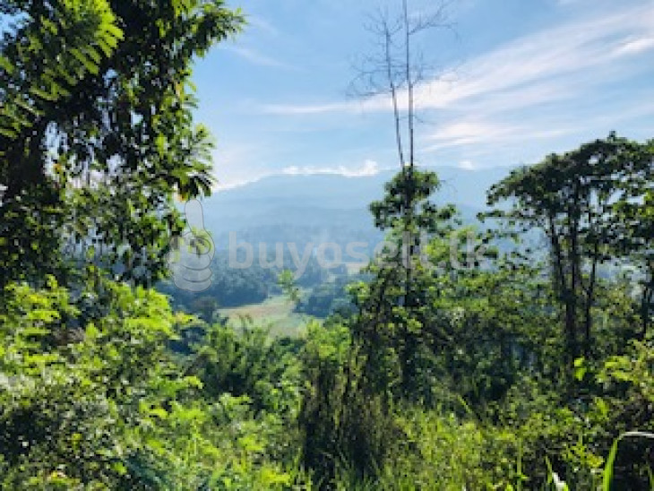 Land with a view for sale for sale in Matale